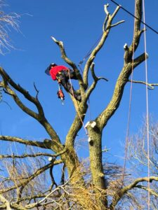 Tree surgeons - Devizes Tree Surgeons