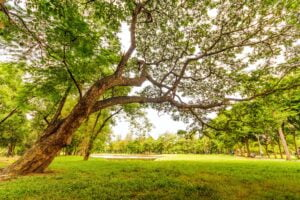 Tree Care Wiltshire & Somerset