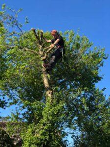 Tree Surgery Wiltshire