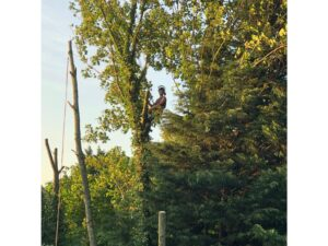 Devizes Tree Services 1
