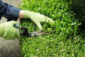 Hedge Trimming Devizes