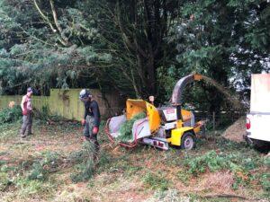 Devizes Tree Services tree maintenance