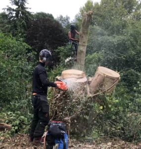 Devizes Tree Services Tree Surgery SN10