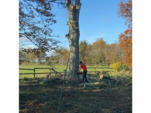 Devizes Tree Services Wiltshire Tree Surgery SN10
