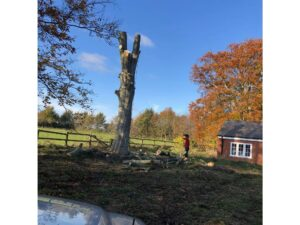 woodland maintenance service Wiltshire