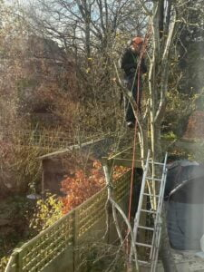 Devizes Tree Services Tree pruning November 2020