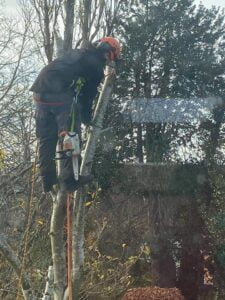 Devizes Tree Services tree cutting November 2020