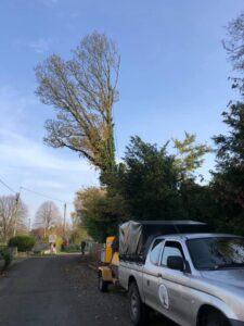 Tree cutting service -Devizes Tree Services 14th November 2020