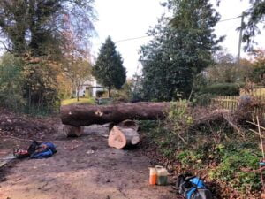 Tree cutting service after 2 -Devizes Tree Services 14th November 2020
