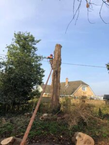 Tree cutting service after -Devizes Tree Services 14th November 2020